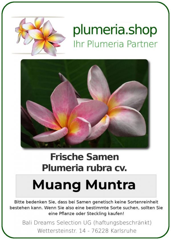 "Plumeria rubra ""Muang Muntra"""
